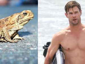 Five reasons Chris Hemsworth could be in Gladstone