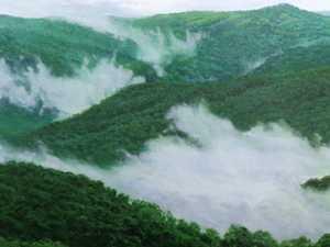 Artist Wayne Malkin sees the light in nature