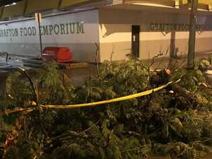 Early bloomer a casualty as Jacaranda City lashed by rain