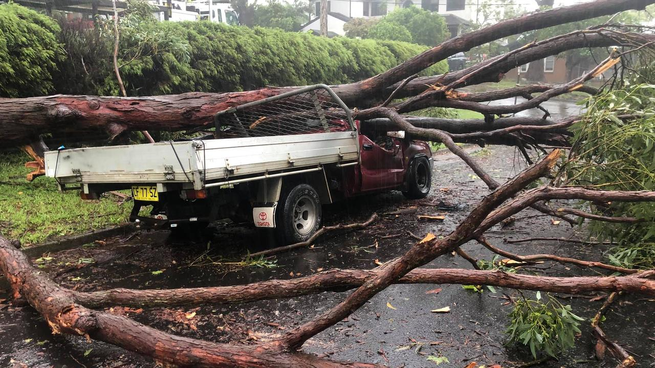 A fallen tree crushes a ute in Terrey Hills. Picture: John Winter