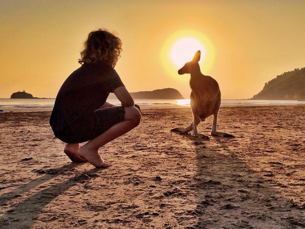 A picture of a wallaby at Cape Hillsborough taken at sunrise. Picture: Aleney de Winter, @boyeatsworld