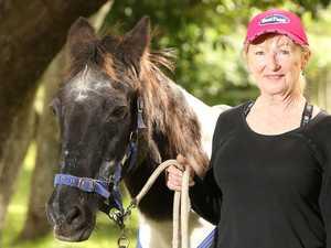 'Tough old fella': Australia's oldest horse dies