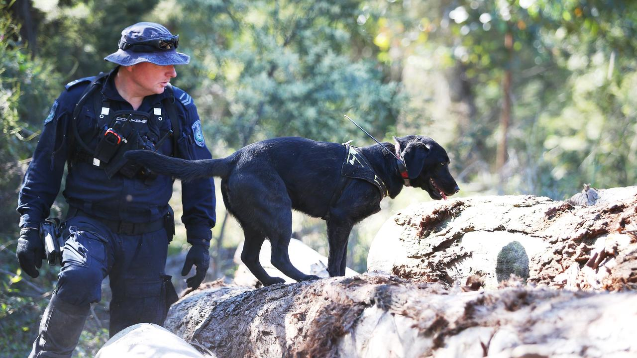 A police officer with a dog investigates a sawmill during the search for William Tyrrell. Picture: AAP