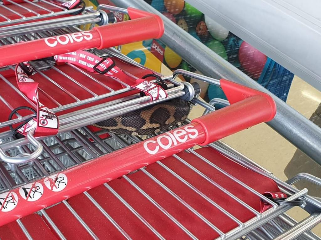A woman spotted the snake nestled into the trolleys at Coles.