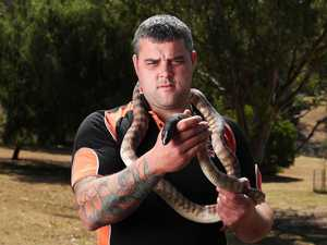 Snake bite fears over 'outdated' permit laws