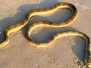 Deadly sea snakes wash up on popular beaches