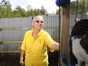 Cat carer sentenced over animal cruelty