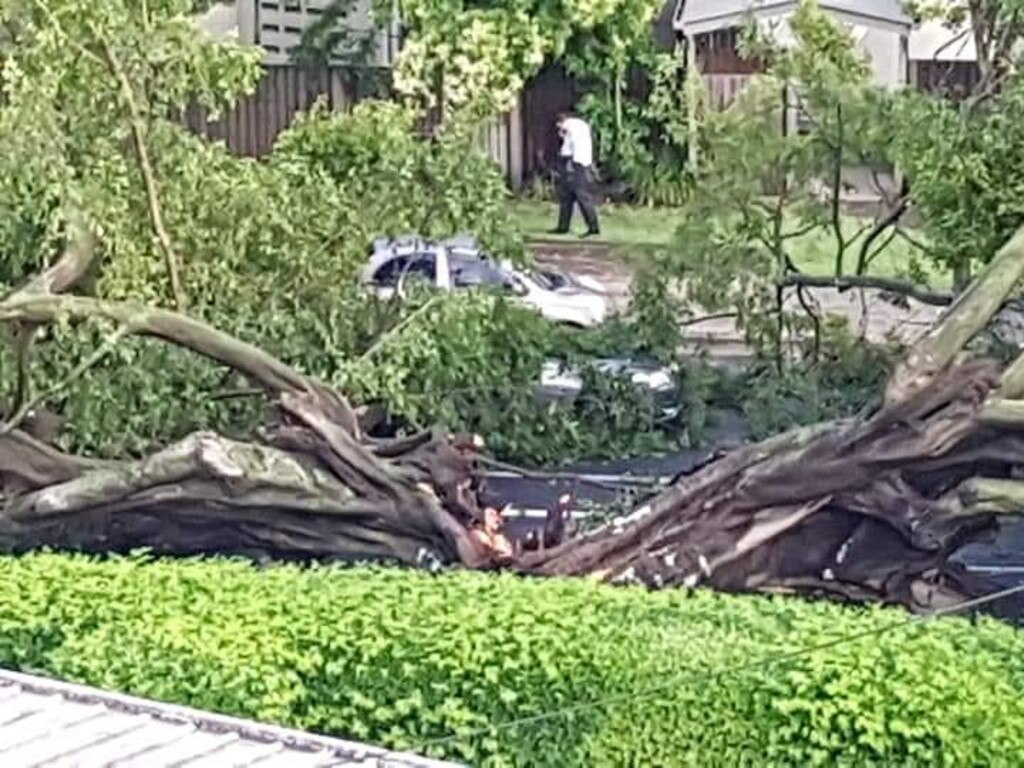 The large tree has fallen onto Sandgate Road in Ascot. Picture: Cameron Krook