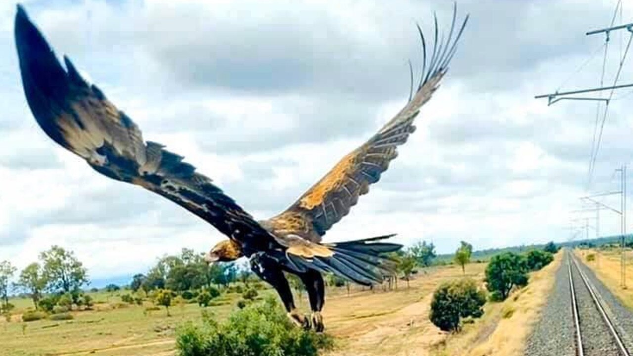 Pacific National train driver Josh Geiger captured this curious wedge-tailed eagle as it flew beside his train travelling through Westwood. He said he had been trying to take the shot for five years. Picture: Contributed.