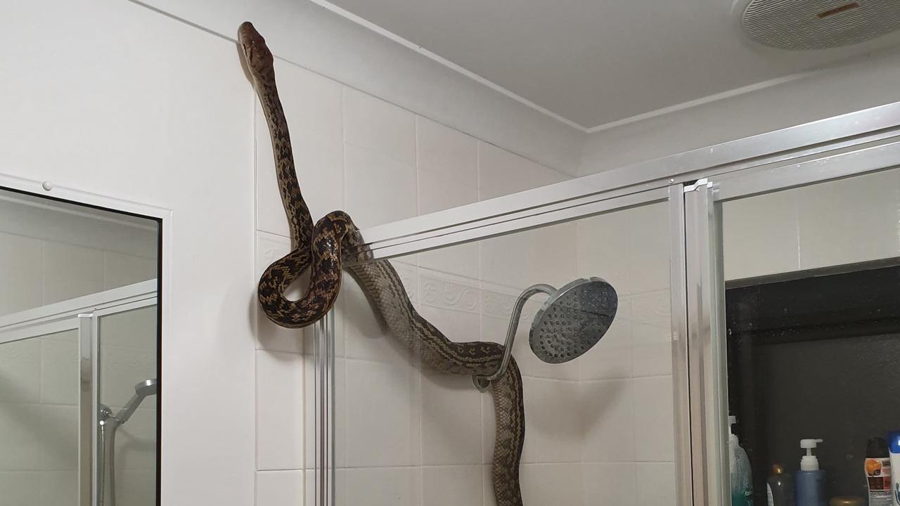 The snake was placed into the shower of Rob Hall after he captured it in his Jubilee Pocket home.