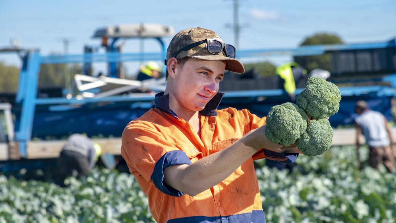Vegetable farmer Mitch Brimblecombe. The 22-year-old manages Moira Farms, growing produce in the Lockyer Valley and Scenic Rim.