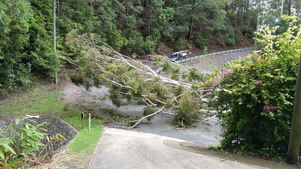A driver has had a lucky escape this morning after a tree fell on his car at Montville. Photo: Max Kenny
