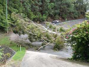 Driver almost 'squashed' as tree comes down on winding road