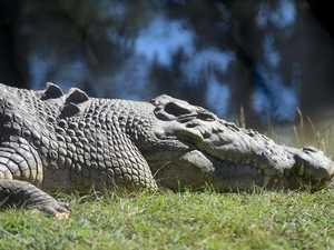 CRIKEY: Croc hot spots around Gladstone revealed