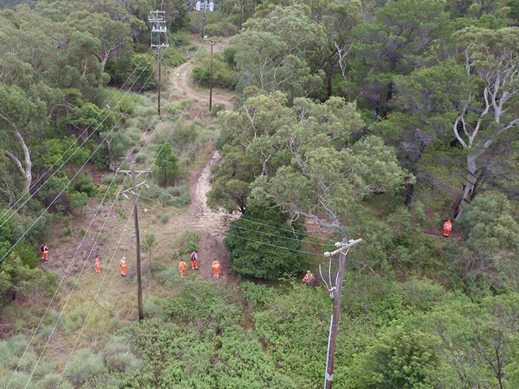 The search of bushland in Sydney's north. Picture: NSW Police