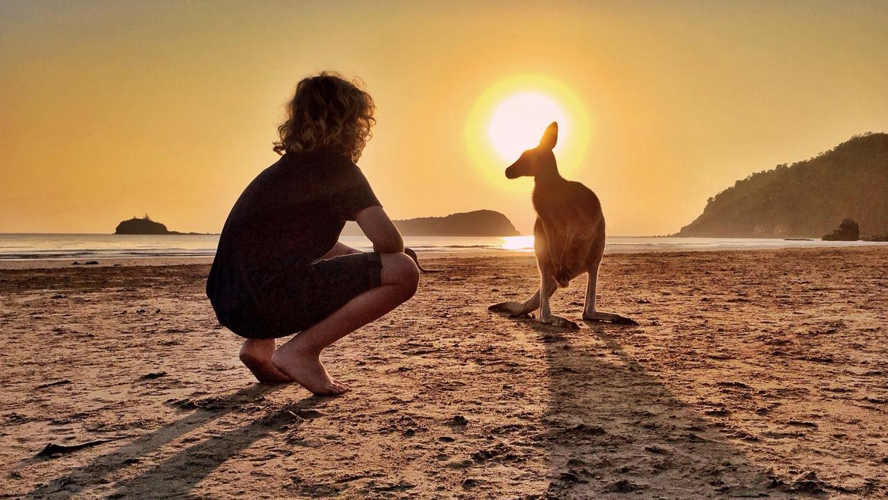 A photograph of a wallaby at Cape Hillsborough taken at sunrise. Picture: Aleney de Winter, @boyeatsworld