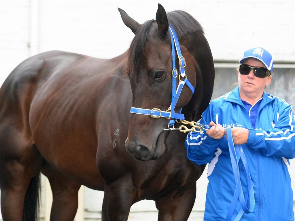 Strapper Donna Fisher at the announcement of Black Caviar's retirement in 2013.