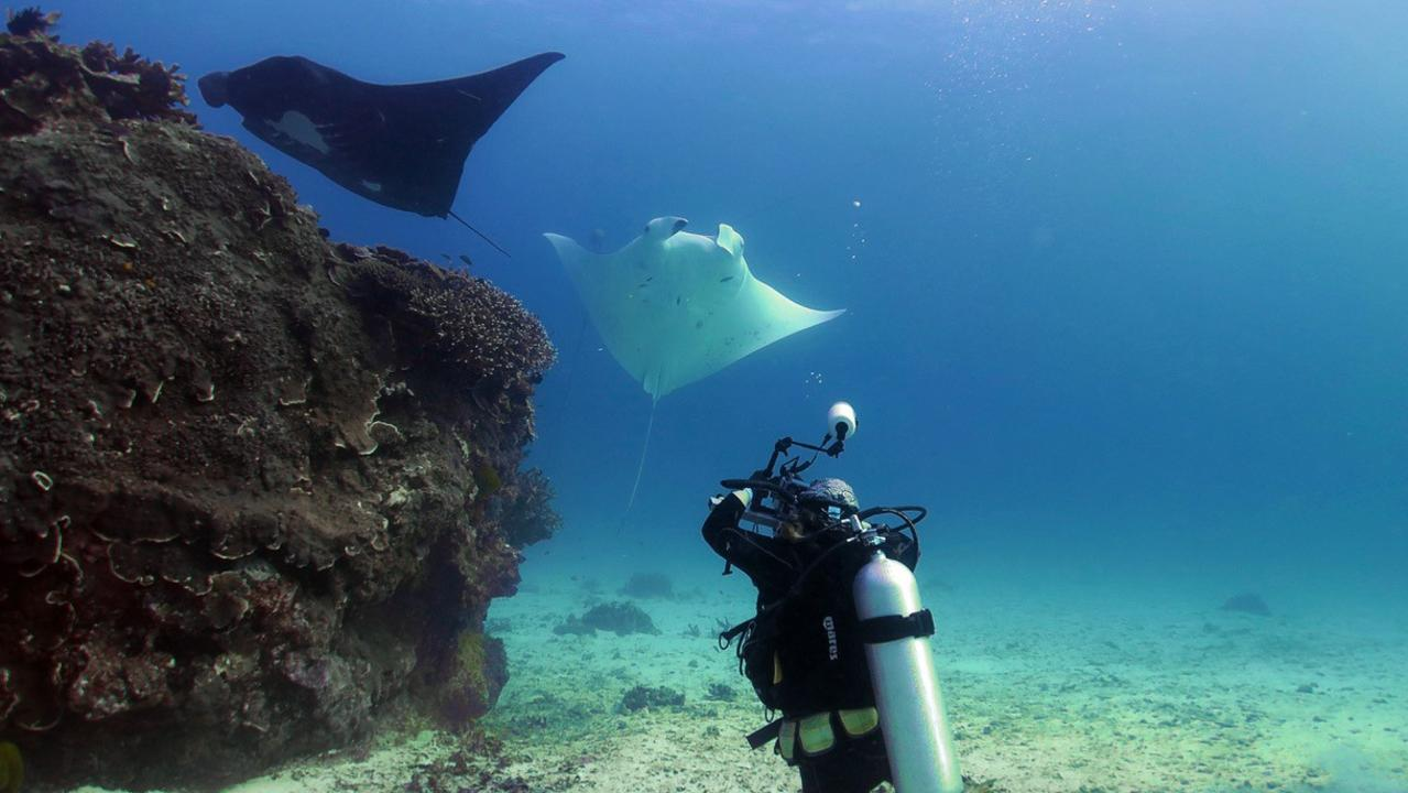 MANTA MAGIC: Dr Kathy Townsend will be heading to Lady Elliot Island next week with Project Manta.