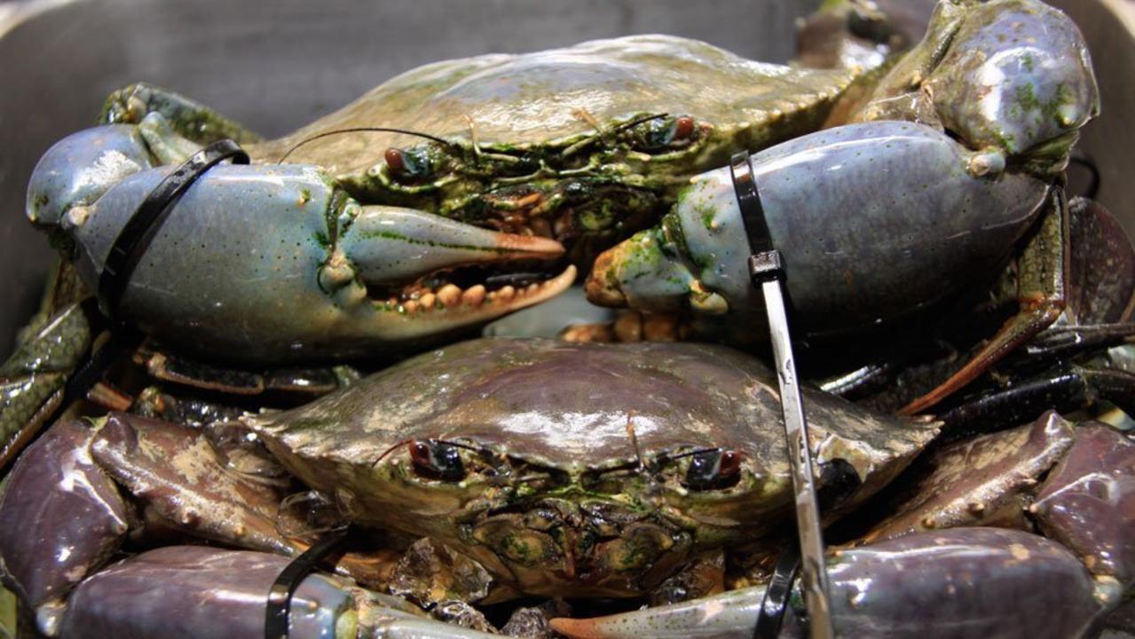 HELP NEEDED: The mud crab industry is feeling the impact of the coronavirus.