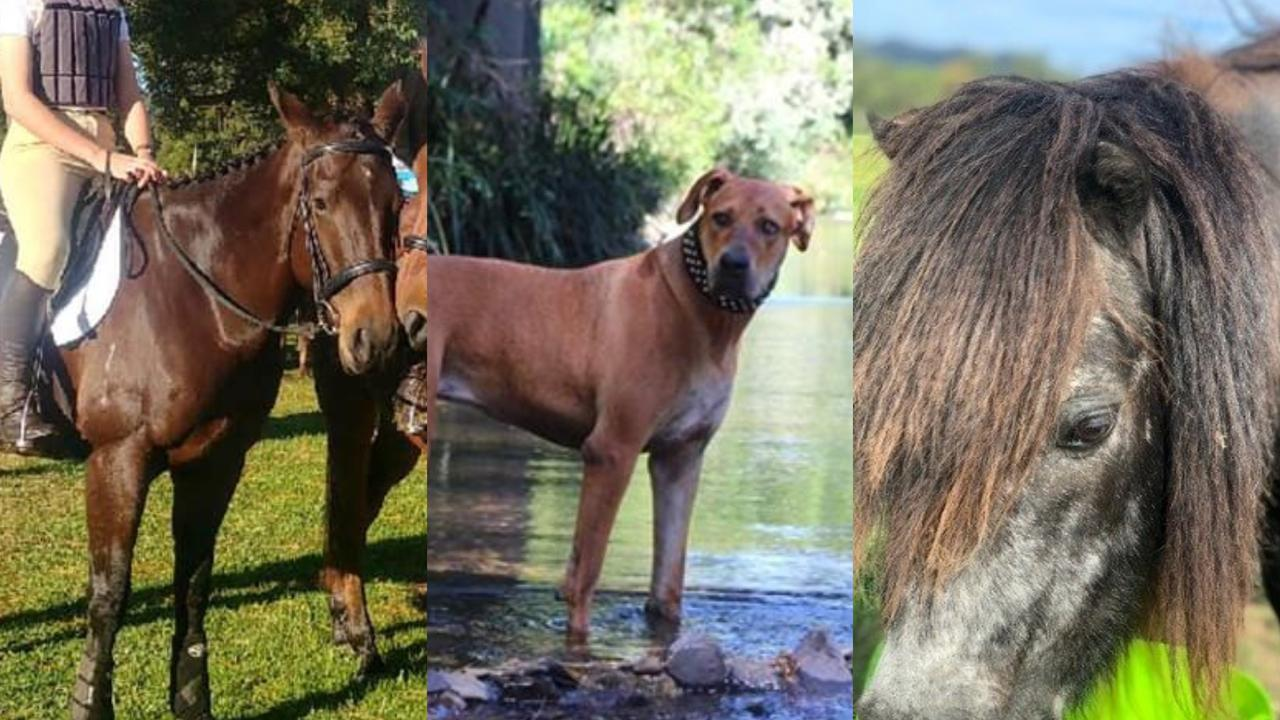 Missing pets on the Coffs Coast from flooding waters.