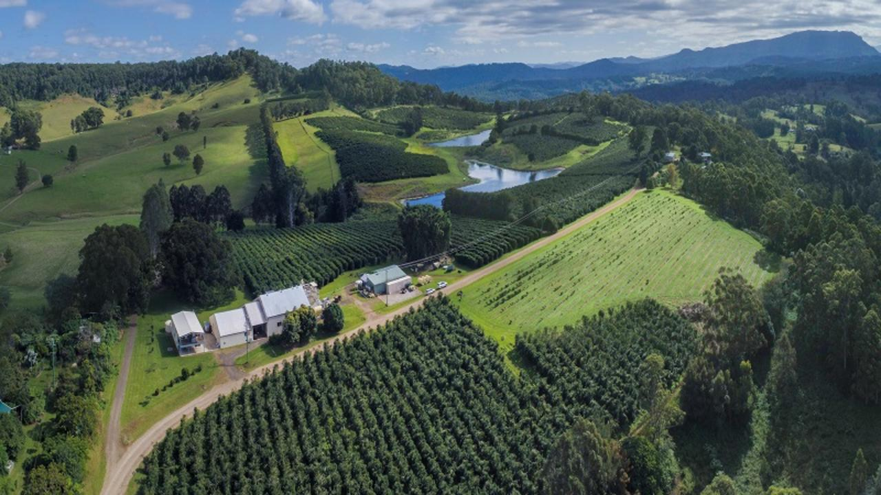 BIG SALE: A well-established coffee plantation Mountain Top Estate at Whitney Rd, Nimbin has sold for $1.6 million. Photo: Century 21 Plateau Lifestyle Real Estate