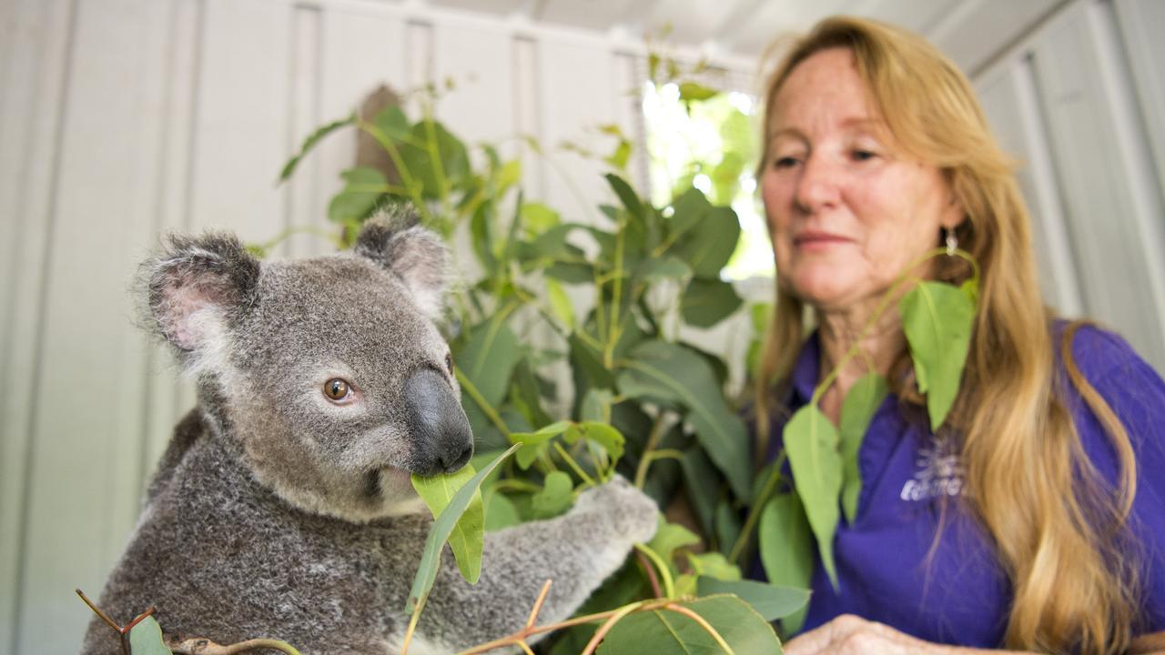 Wildlife carer Trish LeeHong with Michael the koala, a bushfire survivor. Picture: Nev Madsen