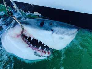 Capricornia's shark control program officially restored