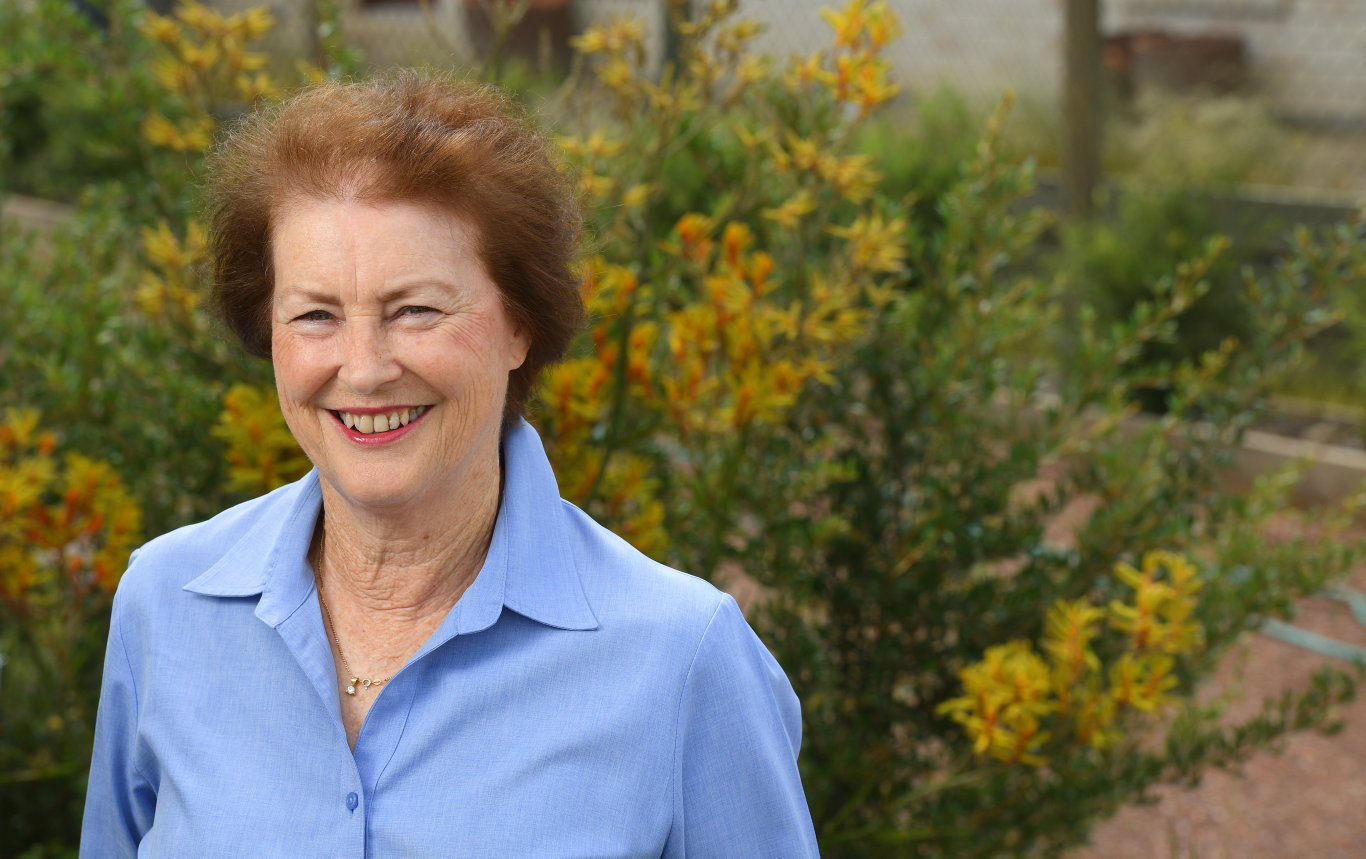 Former councillor Sheila Ireland is putting her hand up as a candidate for division 1 in the Ipswich City Council election.