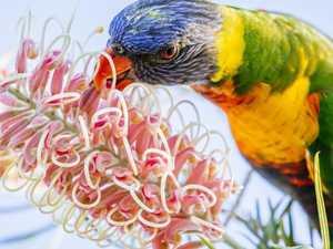 Rumours fuel mystery bird epidemic