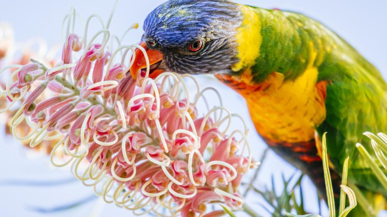 Residents are being urged to deliver sick and injured birds to their local veterinary clinic while wildlife groups try to work out what's causing the epidemic.