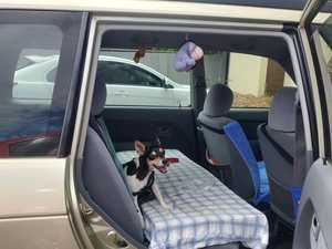 Lucky escape for fox terrier locked in car at library