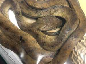 Snake discovered in 'most unusual' hiding place
