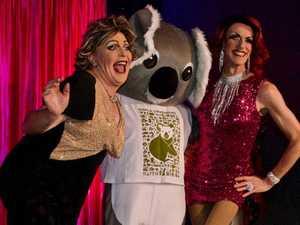 Drag Queen Bingo could be koalas' saviour