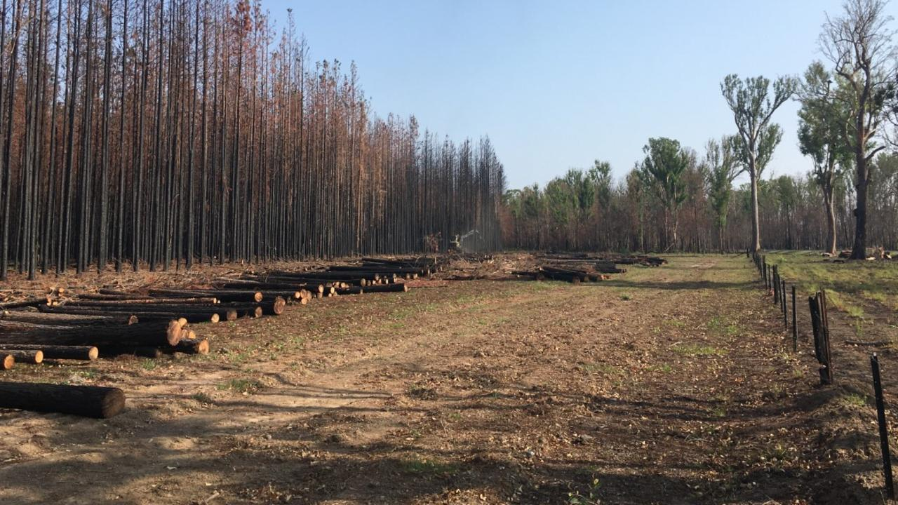 Salvage harvesting has begun at Myrtle State Forest in the Grafton region.