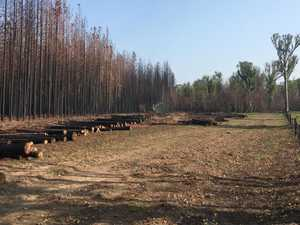 Forestry working to salvage timber burnt during bushfires
