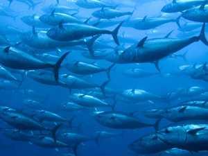 Fishing assistance package to combat impact of coronavirus