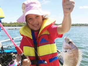 Real threat of more fish kills on the Richmond River