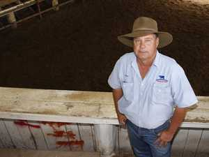 Rain and pasture regrowth pushes cattle prices through roof