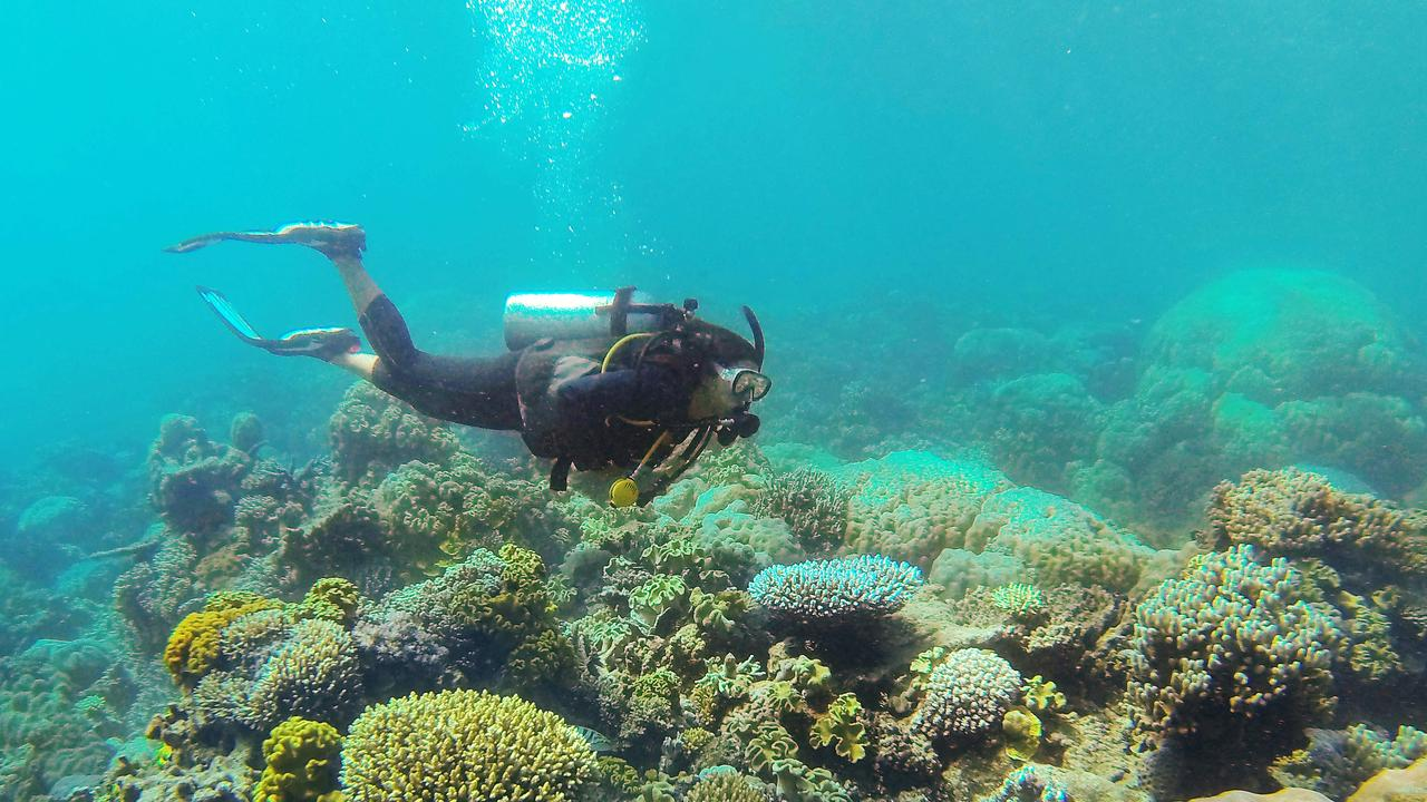 The Great Barrier Reef Marine Park Authority are encouraging people of the Whitsundays to help collect data on coral after they observed above average water temperatures in the region's reefs