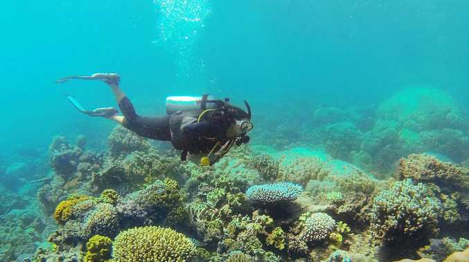 Next weeks 'critical' for reef, Marine Park says