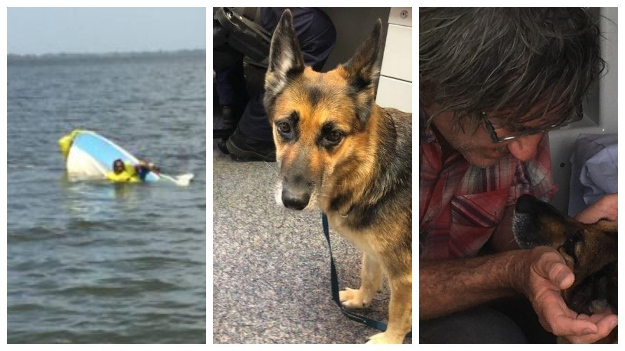 Heidi the german shepherd was found by authorities after treading water for 11 hours. Her discovery helped authorities save the life of a boatie clinging to his sinking vessel. Picture: Qld Police