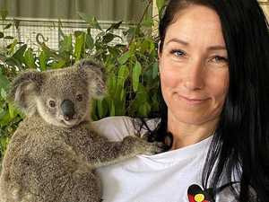 Koala ambulance needs your help to stay on the road
