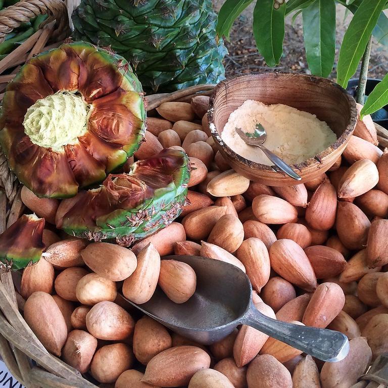 Bunya nuts in their various forms.