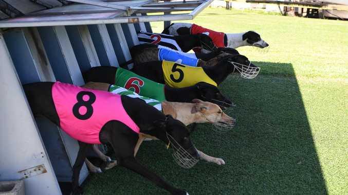 Racing greyhounds test positive for coronavirus in Bundaberg