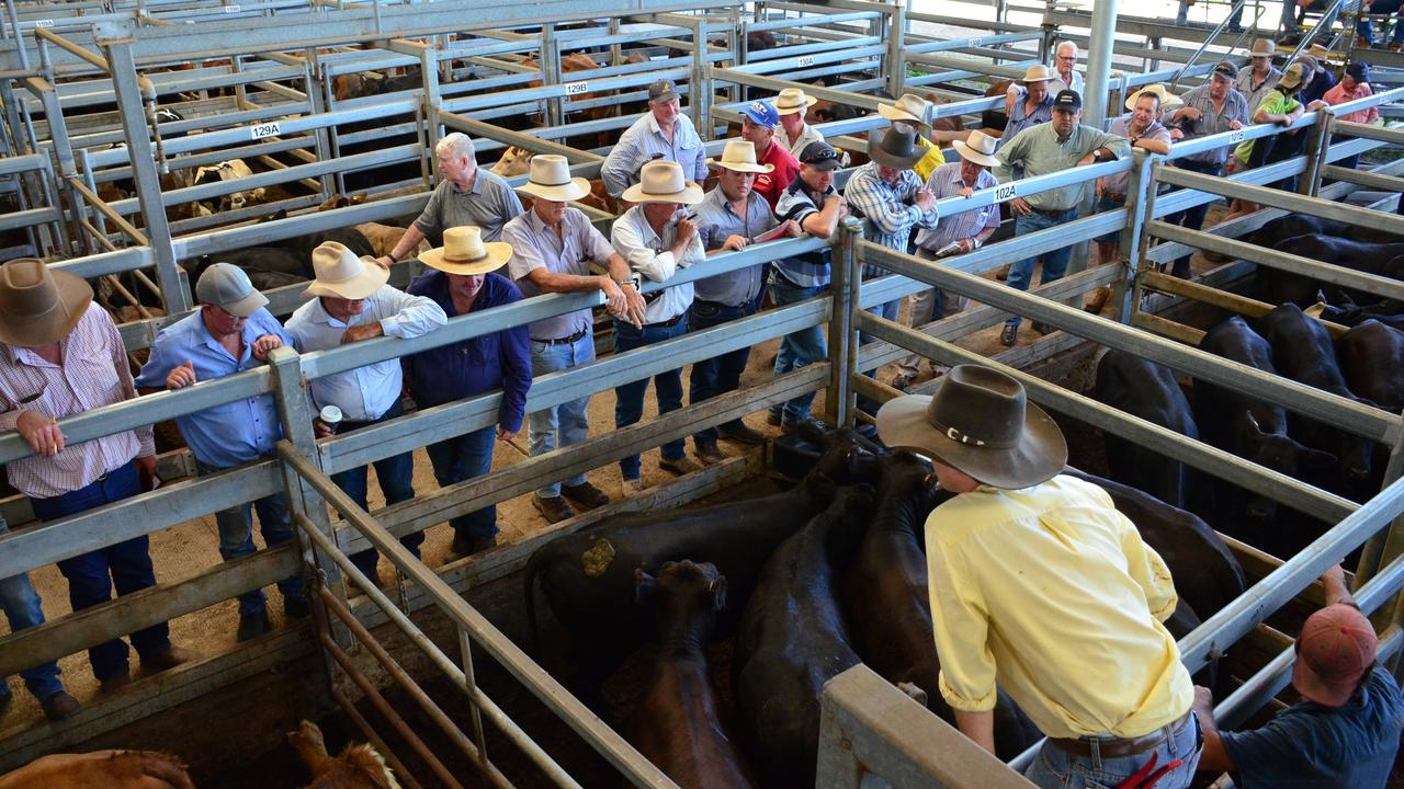PRICE SURGE: The recent February 14 sale at NRLX saw a top price of $4.74 per kilogram, compared to only $2.65 in February last year. Photo: Supplied