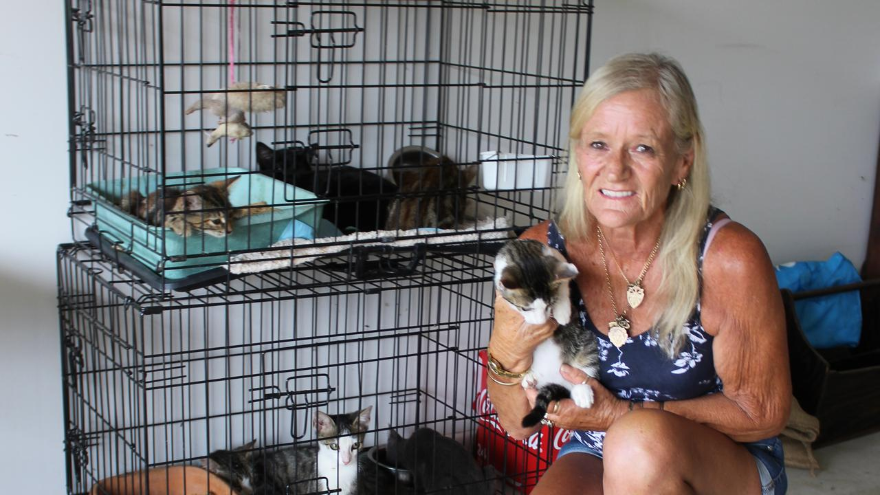 DEVASTED: Dianne Wills along with her daughter Talei Marshall and her friend Tracey Prenner spent three days rescuing cats that had been dumped on the side of the road near Blackbutt. Photo: Laura Blackmore