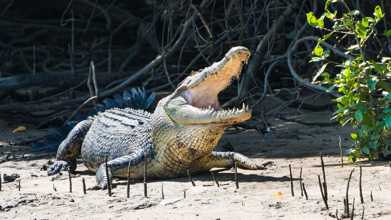 CLOSED: Spinnaker Park Beach is closed until further notice after a reported croc sighting. Pictured: Generic Townsville crocodile