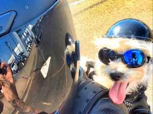 Meet Bundy's biker pooch
