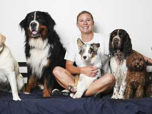 Proof Aussie pooches more spoiled than kids