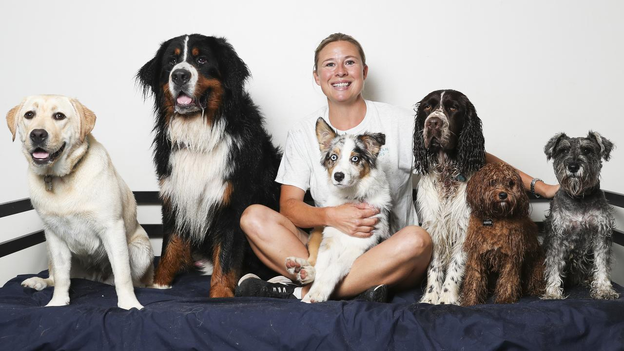From personalised collars to receiving facials and going to doggie day care, these pampered pooches are more spoiled than kids. See how and why, and where the best dog-friendly activities are around you. Picture: Dylan Robinson